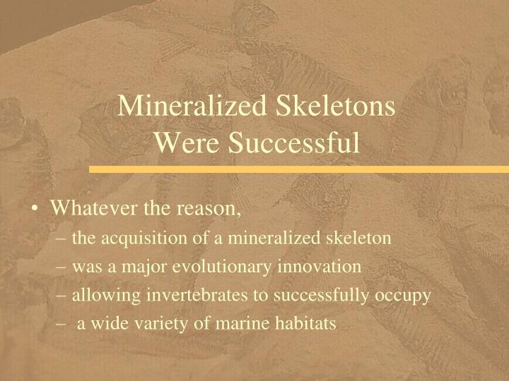 Mineralized Skeletons