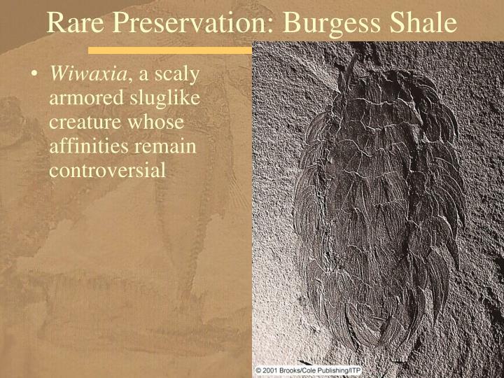 Rare Preservation: Burgess Shale