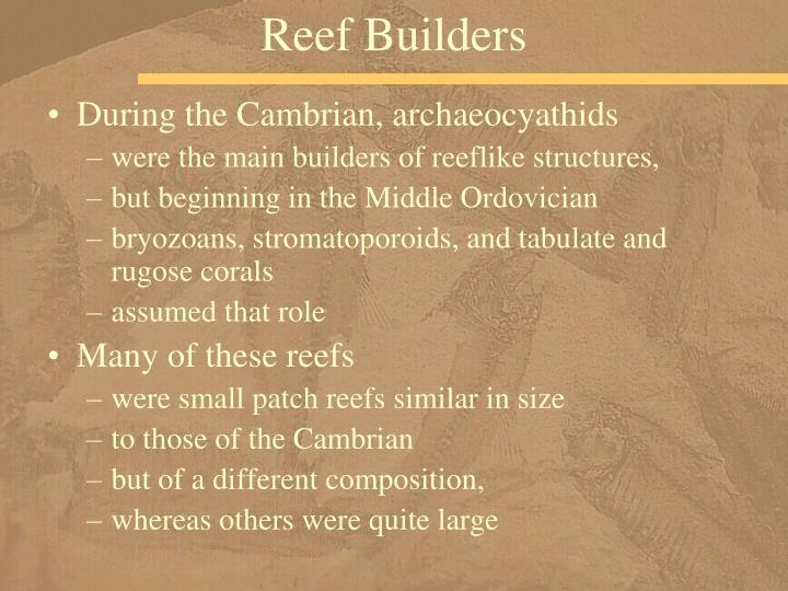 Reef Builders