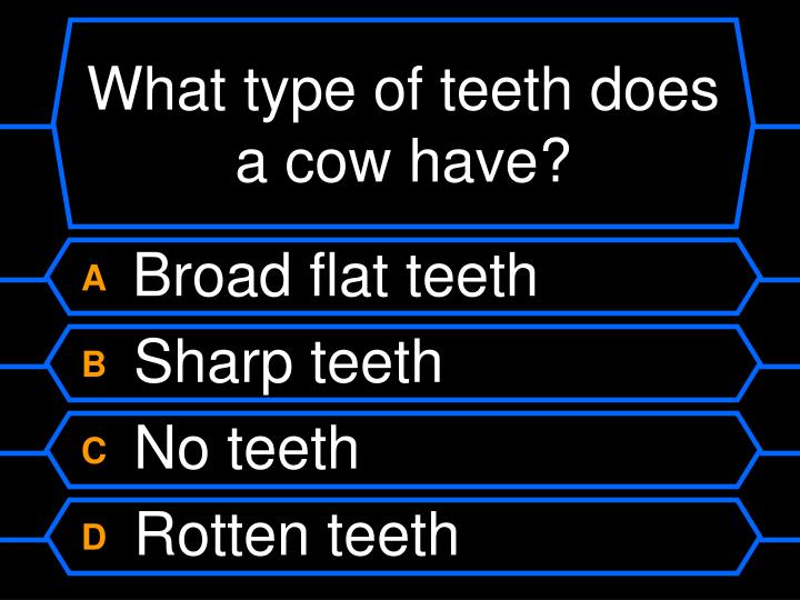 What type of teeth does a cow have?