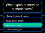 what types of teeth do humans have1