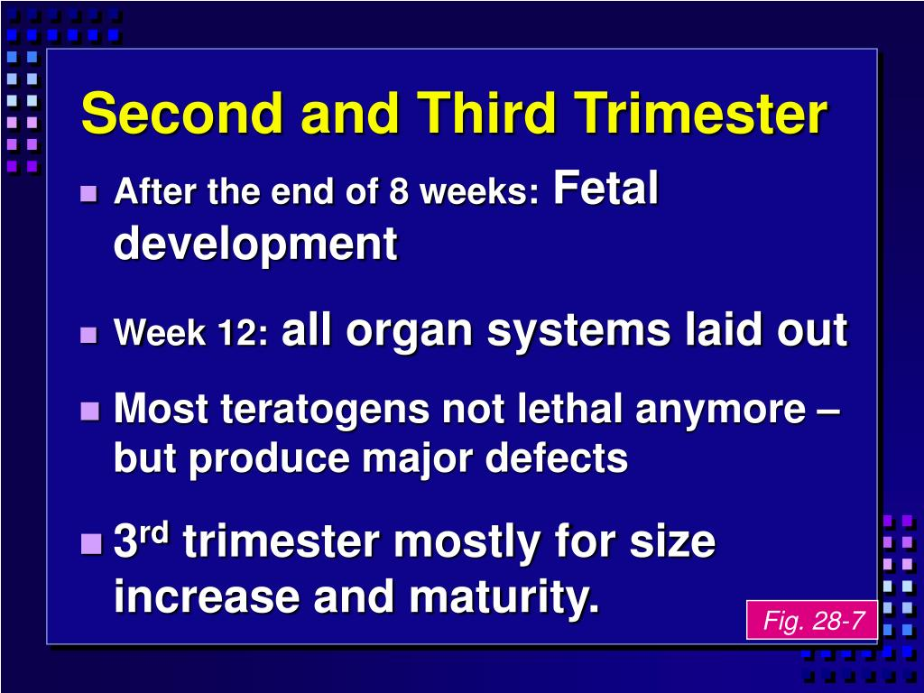 Second and Third Trimester
