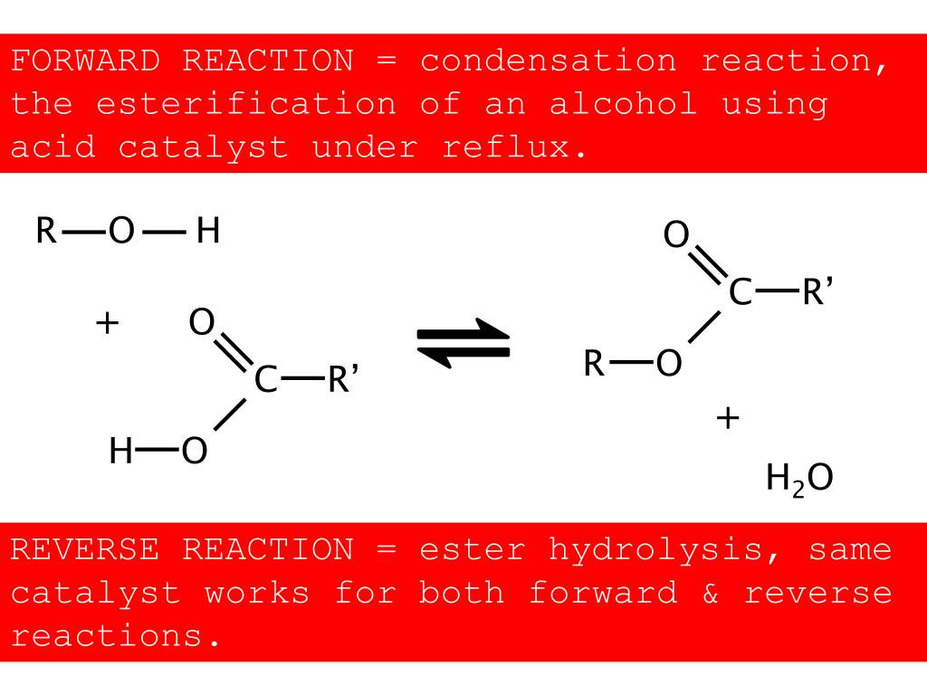 FORWARD REACTION = condensation reaction, the esterification of an alcohol using acid catalyst under reflux.