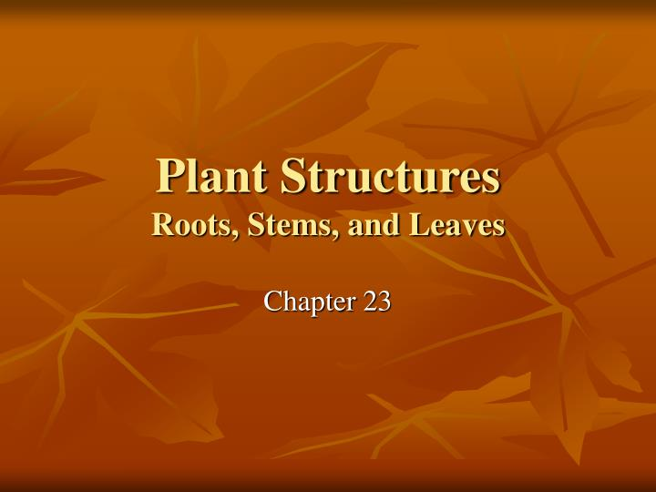 plant structures roots stems and leaves n.