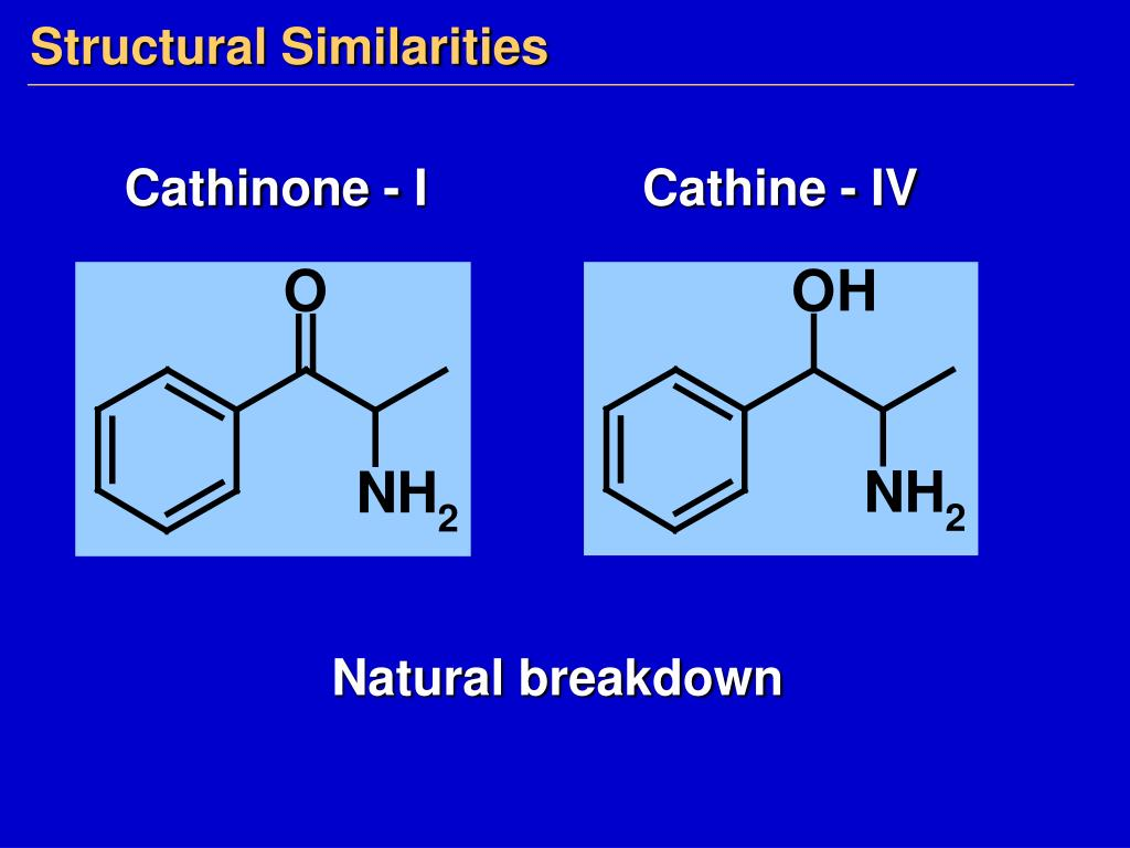 Structural Similarities
