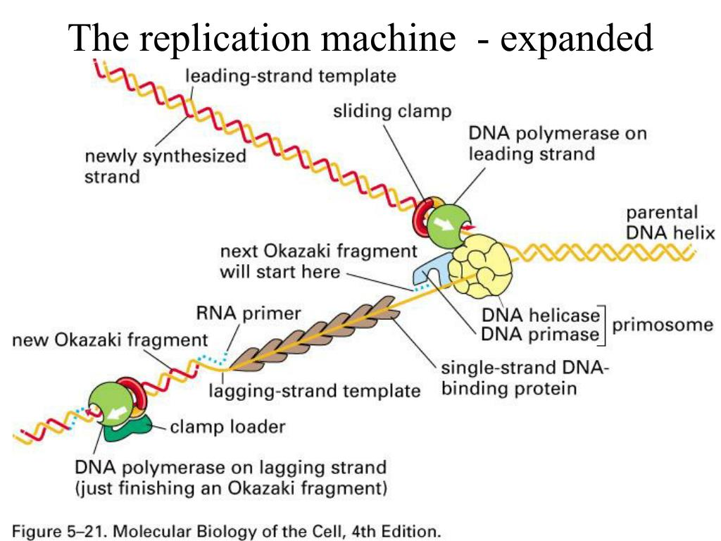 The replication machine  - expanded