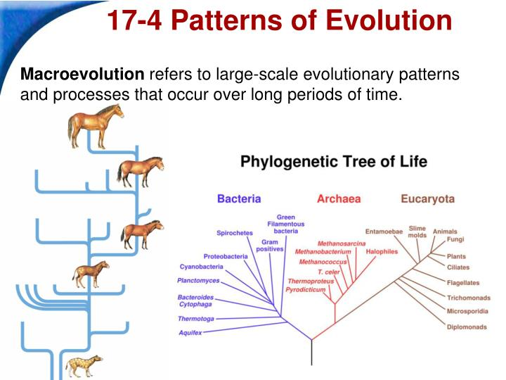 PPT Biology PowerPoint Presentation ID60 Stunning Section 174 Patterns Of Evolution