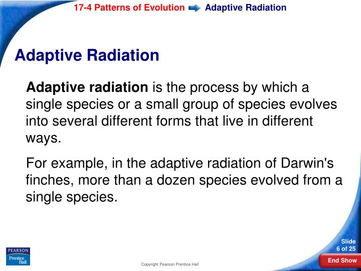 PPT Biology PowerPoint Presentation ID60 Mesmerizing Section 174 Patterns Of Evolution