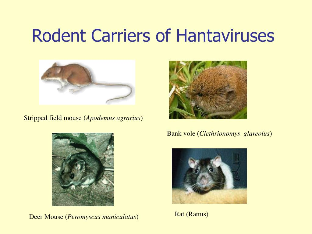 Rodent Carriers of Hantaviruses