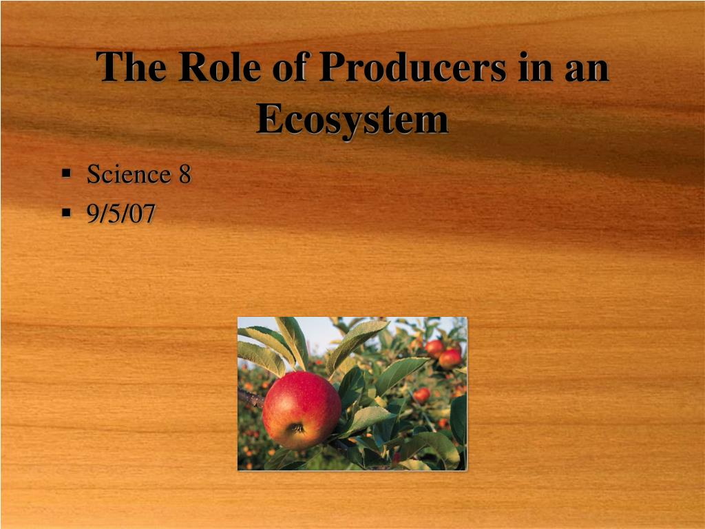 The Role of Producers in an Ecosystem