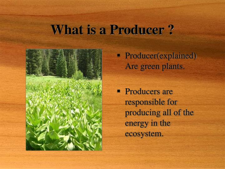 What is a producer