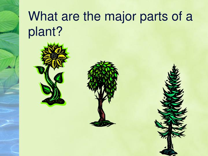 What are the major parts of a plant