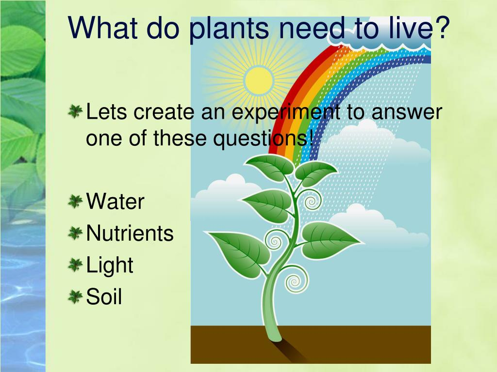 What do plants need to live?