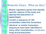 homeotic genes what are they