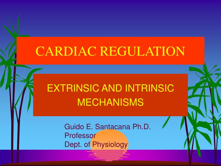 cardiac regulation n.