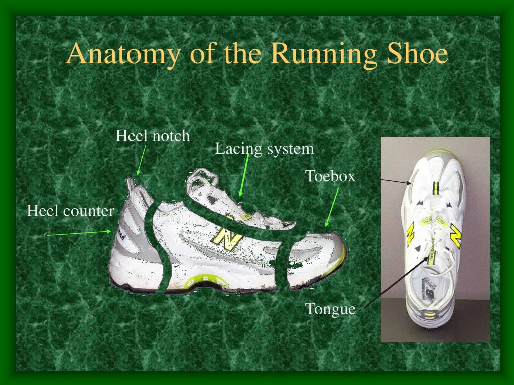 Anatomy of the Running Shoe