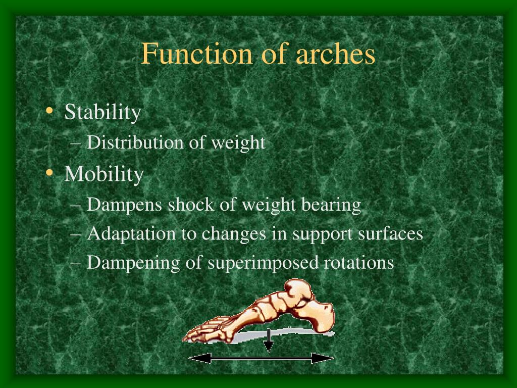 Function of arches