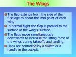 the wings2
