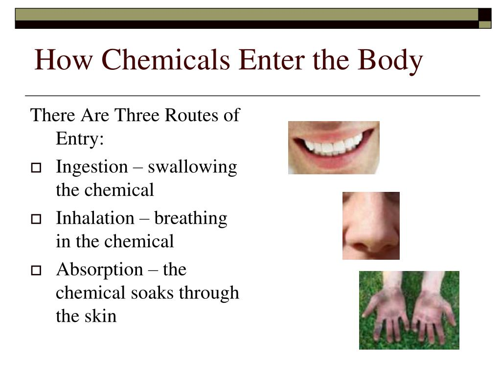 How Chemicals Enter the Body