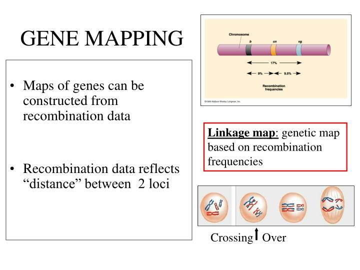 ethics of gene mapping for personalized treatment Personalized medicine 31 stories  fast genomic sequencing is beginning to yield medicines tailored to your genes  brain maps for stroke treatment.