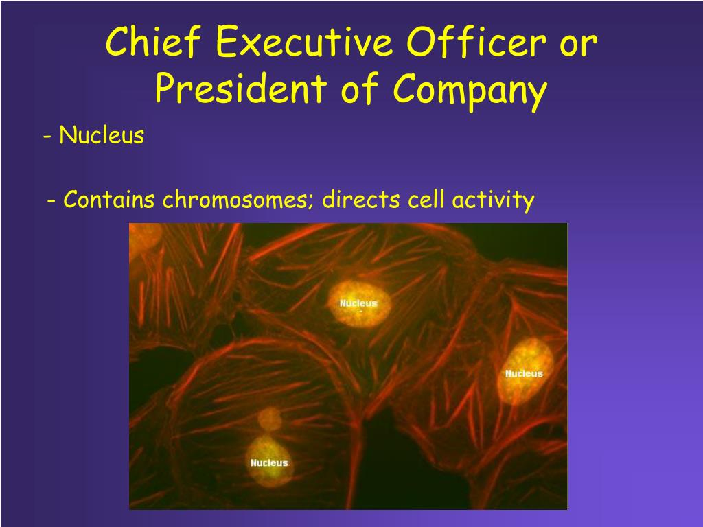 Chief Executive Officer or President of Company