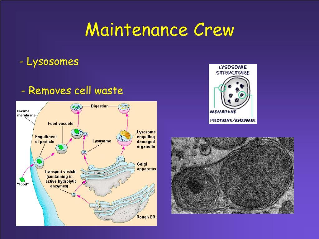 Maintenance Crew