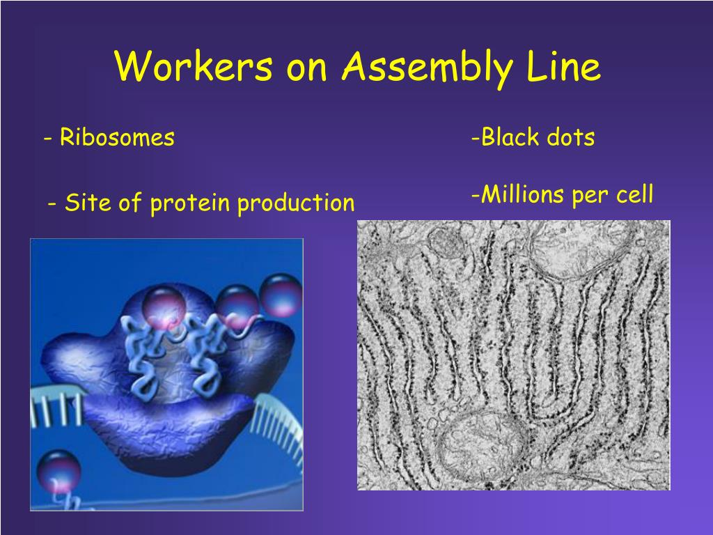 Workers on Assembly Line