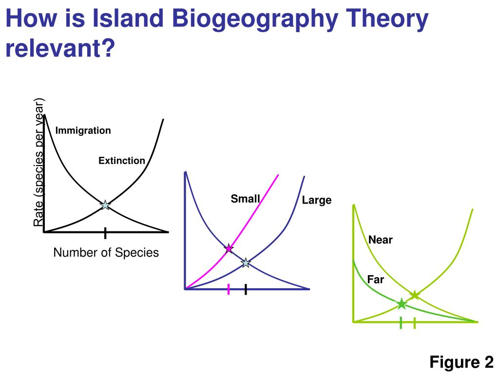theory of island biogeography In this theory, the adaptation and evolution of species is assumed to  in island  biogeography theory, islands are isolated from a mainland.