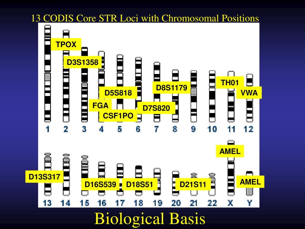 13 CODIS Core STR Loci with Chromosomal Positions