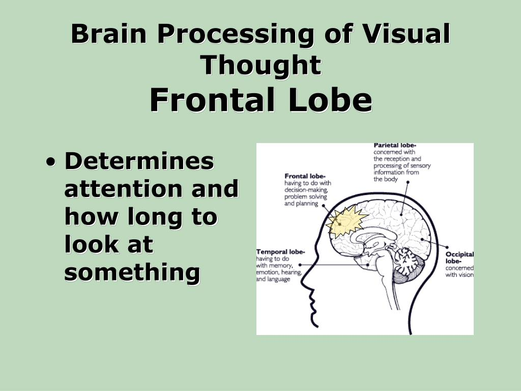 Brain Processing of Visual Thought