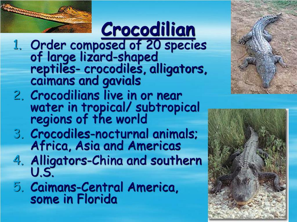 Order composed of 20 species of large lizard-shaped reptiles- crocodiles, alligators, caimans and gavials