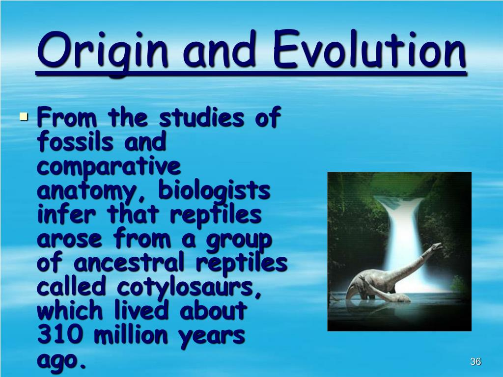 Origin and Evolution