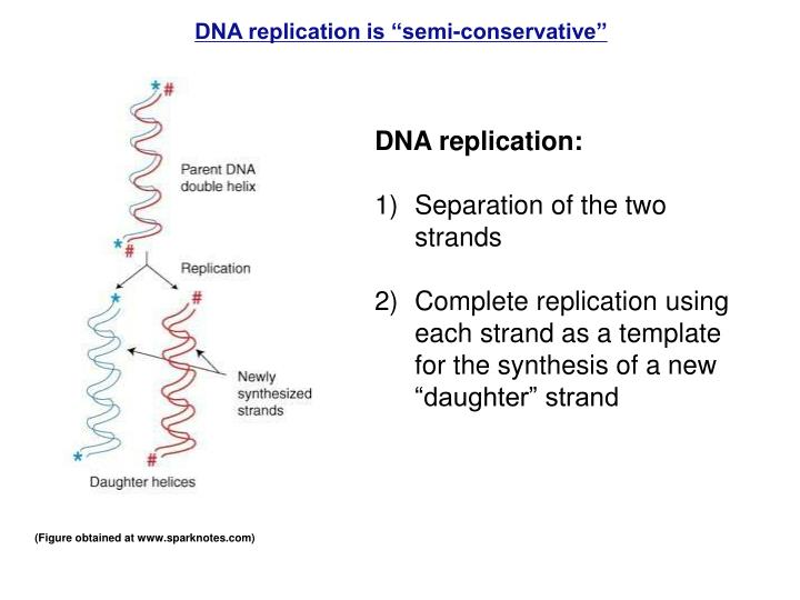 dna replication body system Assessment | biopsychology | comparative | cognitive | developmental | language | individual differences | personality | philosophy | social | methods | statistics | clinical | educational | industrial | professional items | world psychology .