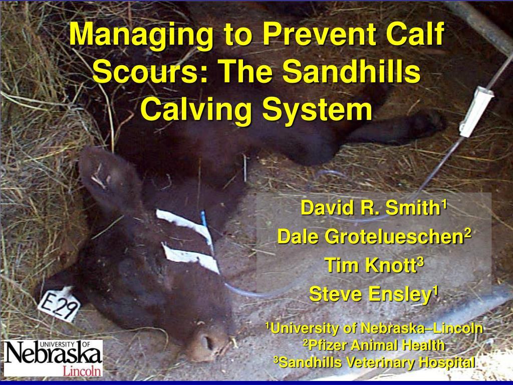 managing to prevent calf scours the sandhills calving system l.
