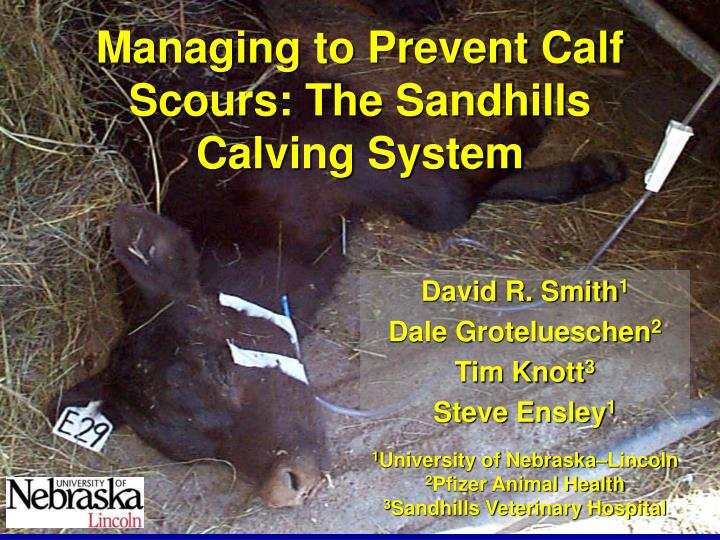 managing to prevent calf scours the sandhills calving system n.