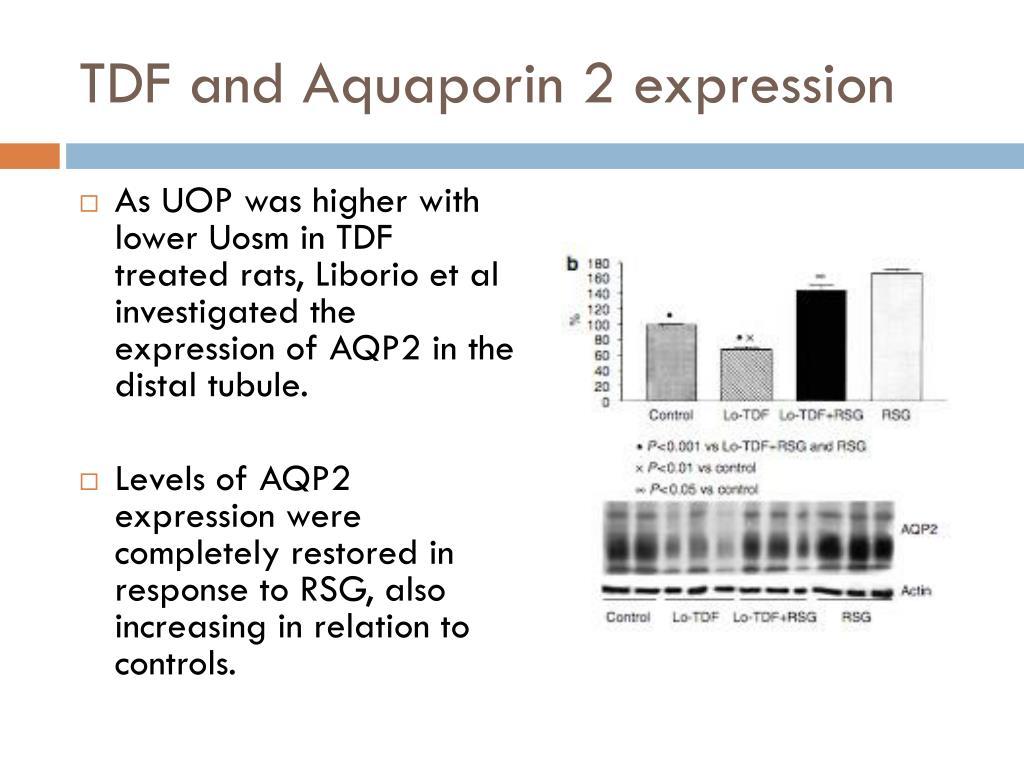 TDF and Aquaporin 2 expression