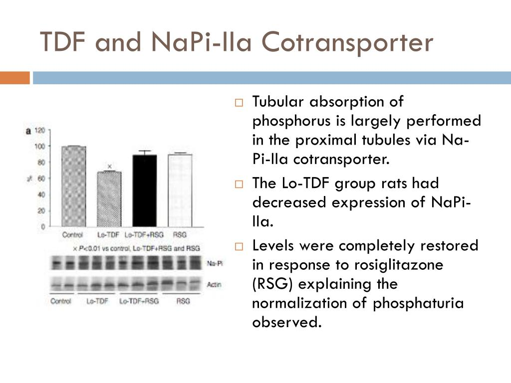 TDF and NaPi-IIa Cotransporter
