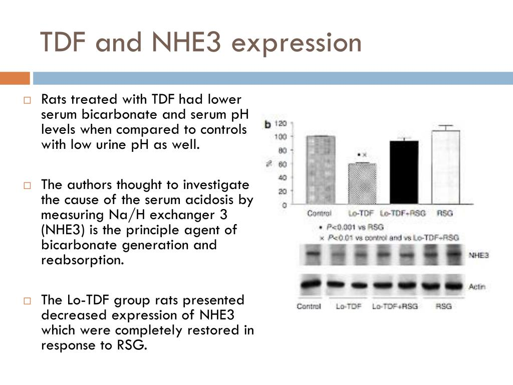 TDF and NHE3 expression