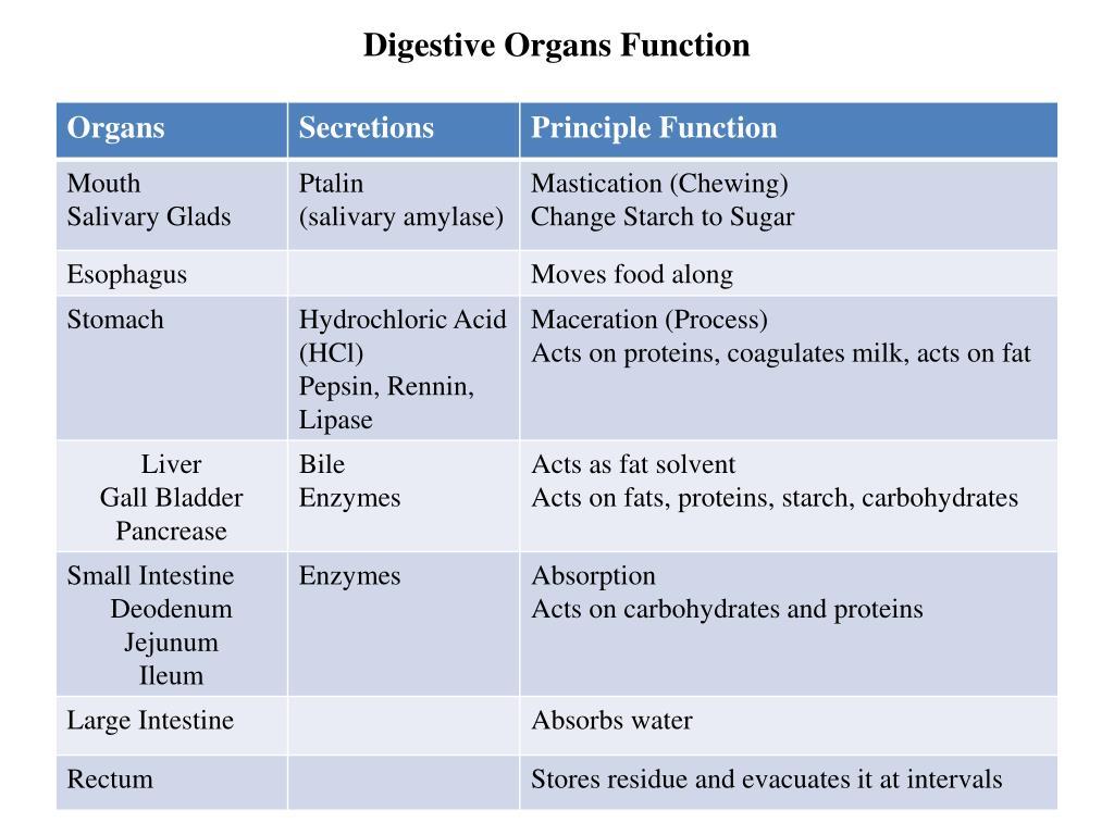 Digestive Organs Function