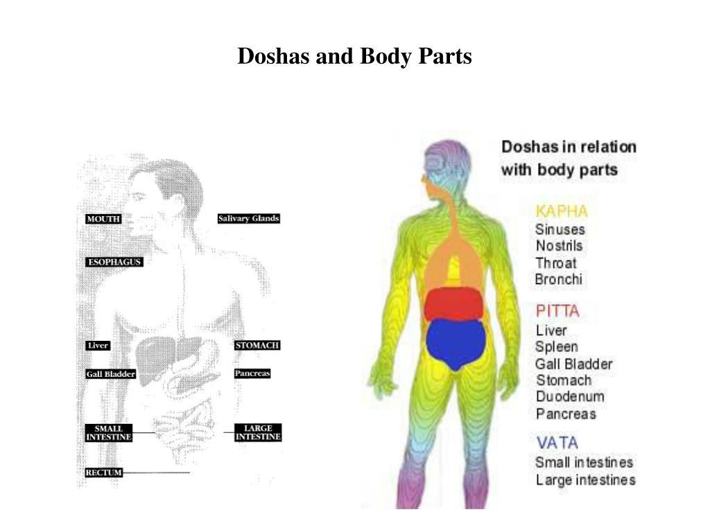 Doshas and Body Parts