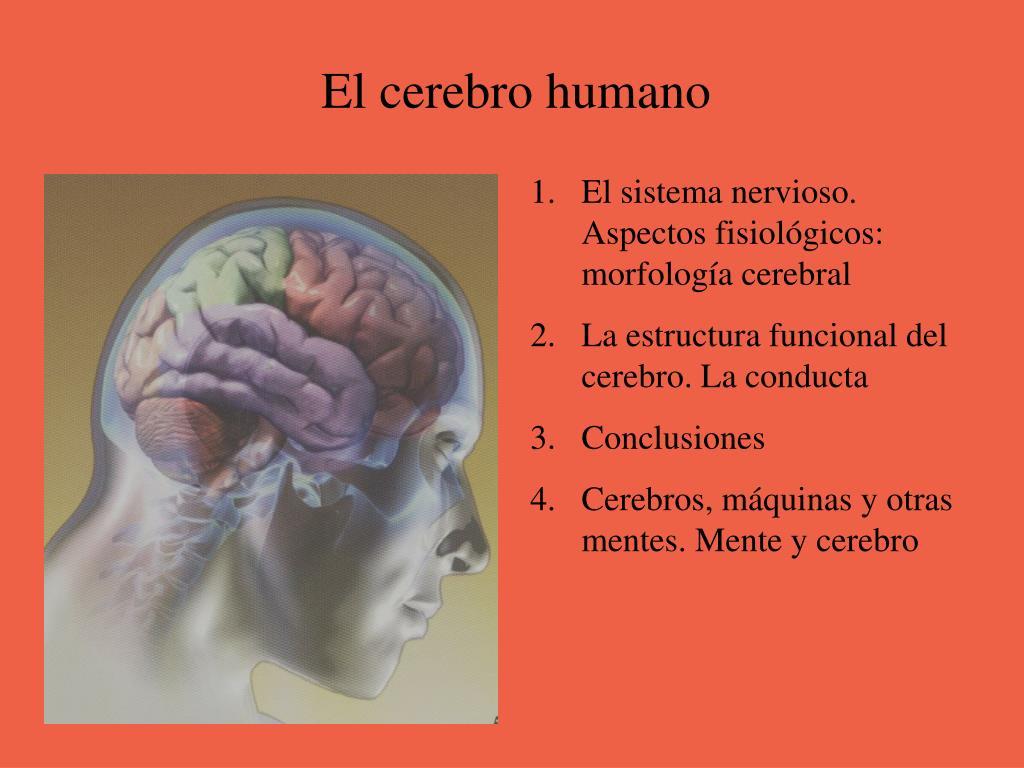 Ppt El Cerebro Humano Powerpoint Presentation Free