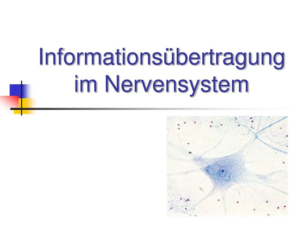 informations bertragung im nervensystem