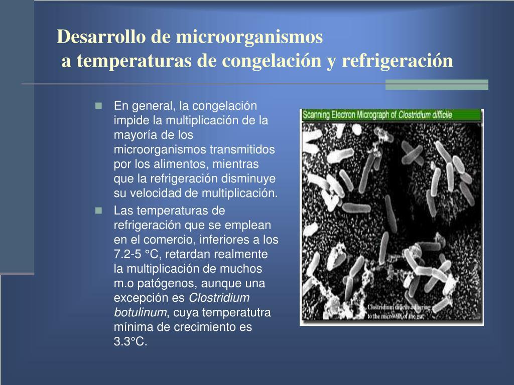 Desarrollo de microorganismos