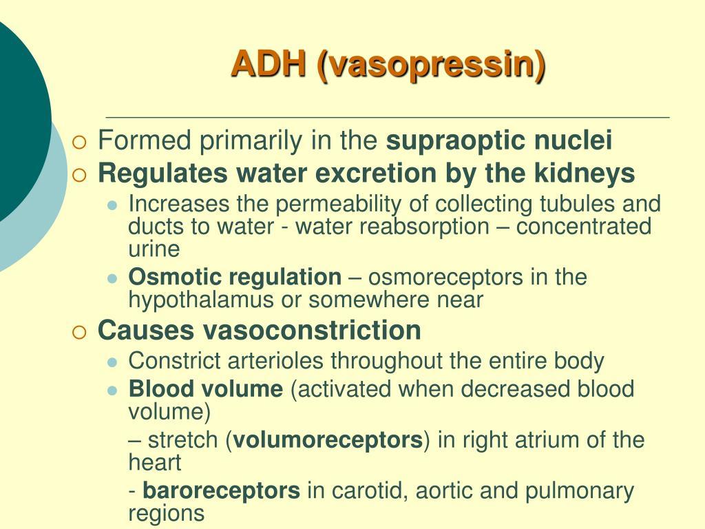 ADH (vasopressin)