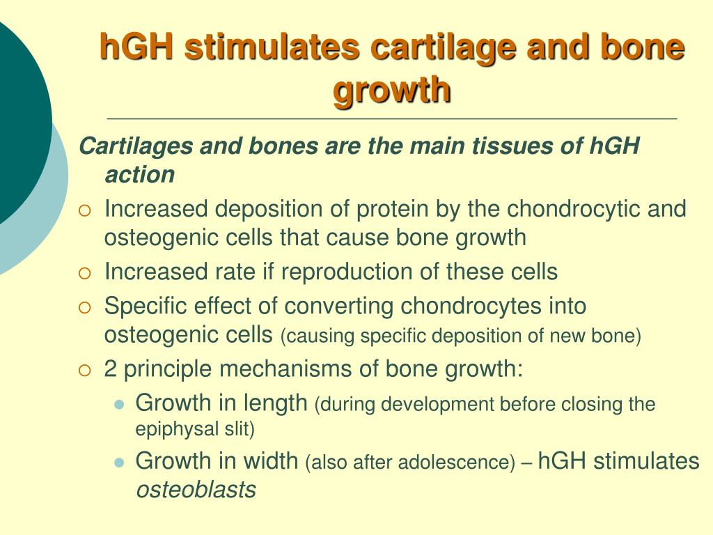 hGH stimulates cartilage and bone growth