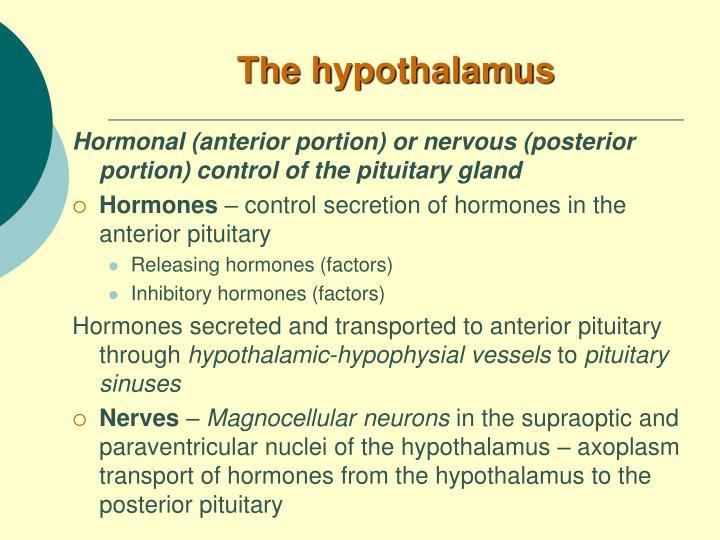 The h ypothalamus