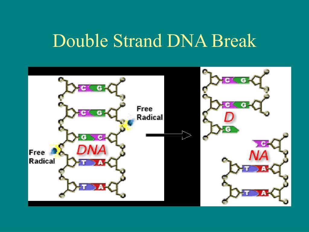 Double Strand DNA Break
