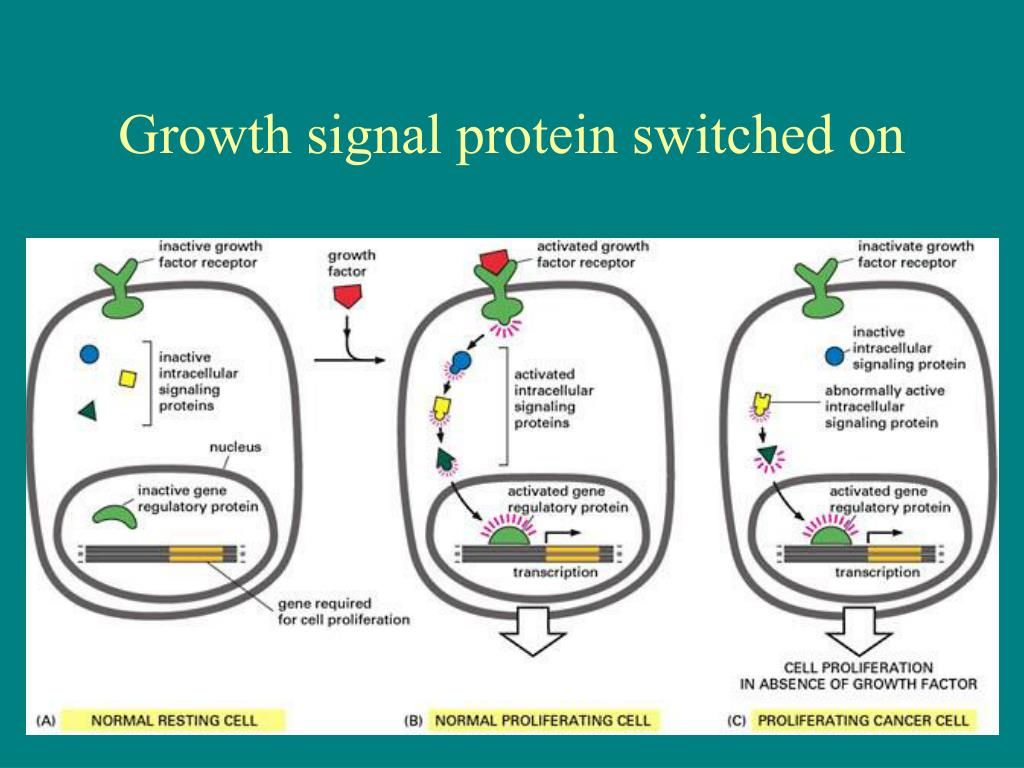 Growth signal protein switched on