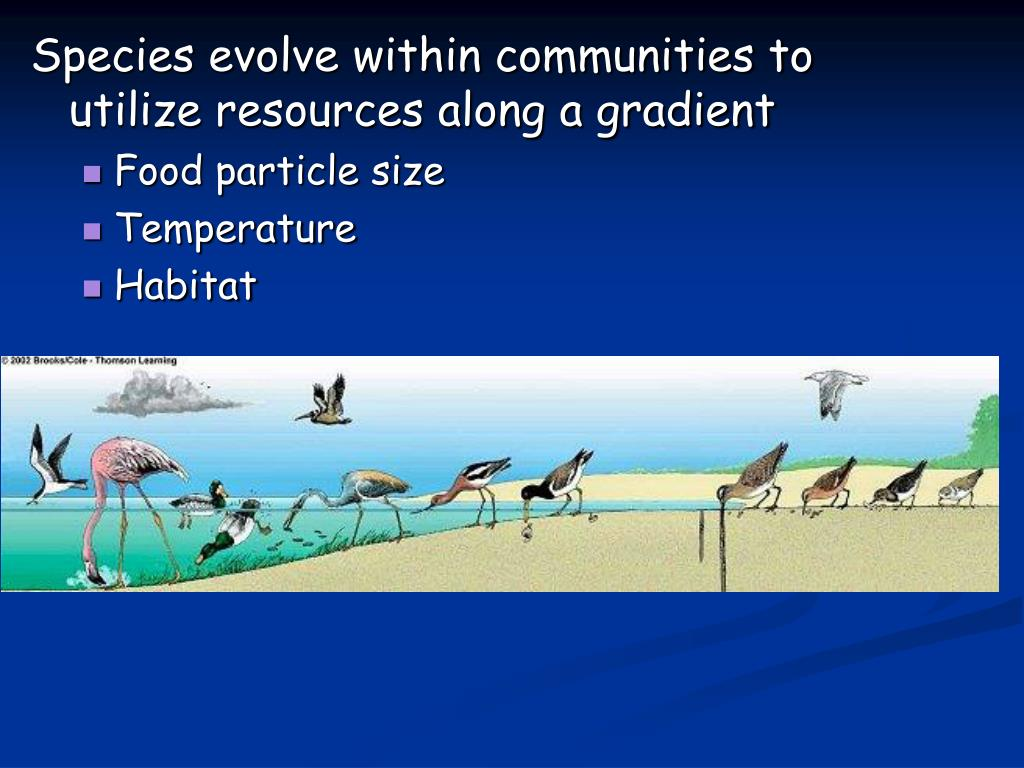 Species evolve within communities to utilize resources along a gradient