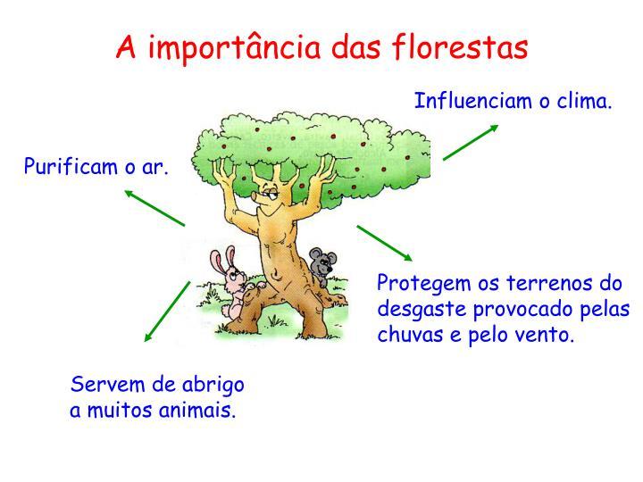 A import ncia das florestas